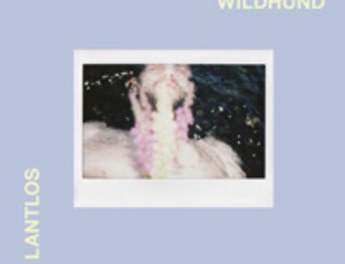 """LANTLOS – """"Wildhund"""""""